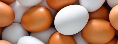 clear-egg