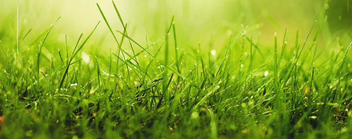 Our green philosophy